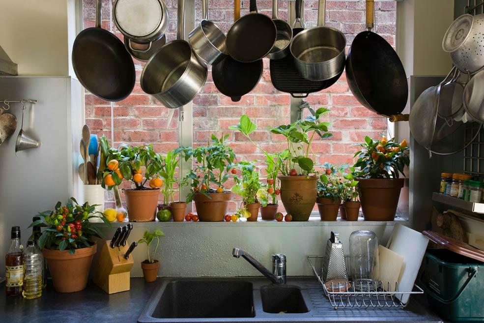 растения-на-кухне